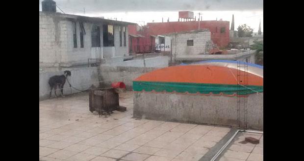 Acusan maltrato de dos perros en azotea de San Bernabé Temoxtitla