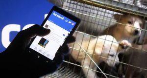 Facebook le dice no a la venta de mascotas en sus plataformas