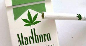 Marlboro le entra a la marihuana e invierte en compañía canadiense