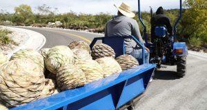 En municipio de Huehuetlán el Grande, inauguran la Ruta del Mezcal