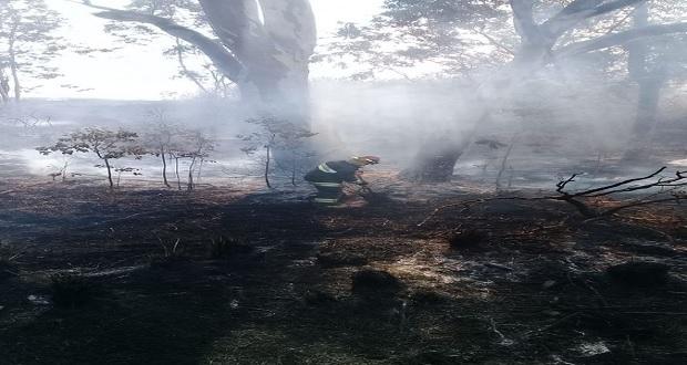 Sofocan incendio en pastizal cerca de la Central de Abasto