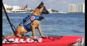 """En Cancún, se extravía """"Nina"""" la primera perra salvavidas de México"""