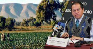 Puebla, con potencial de producción agrícola sin aprovechar: experto. Foto: Especial