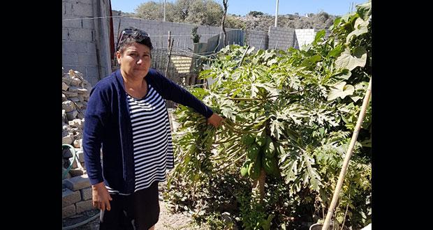 Huertos familiares de Tehuacán tienen buenos resultados, destacan