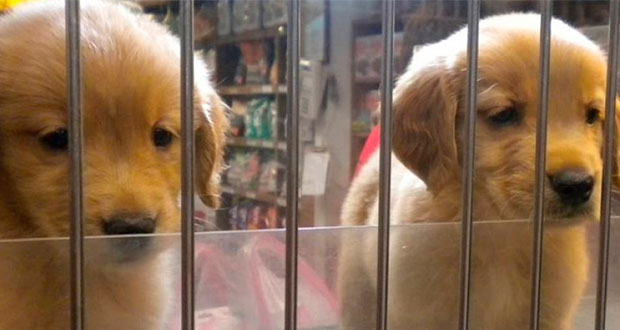 En California prohíben vender mascotas que no sea de refugios