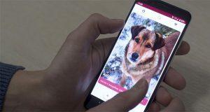 En Lituania crean app que permite adopción de perros en refugios