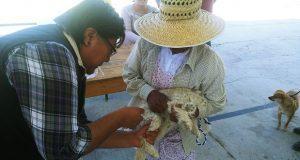 Ayuntamiento de Atexcal inicia campaña de vacunación antirrábica