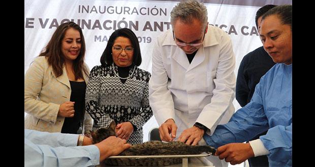 Inicia en Puebla semana de vacunación antirrábica canina y felina