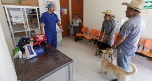 Realizan esterilización de mascotas en Ahuatempan