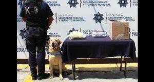 Unidad canina asegura 800 gramos de marihuana en San Rafael Oriente