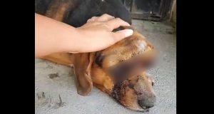 ONG ofrece recompensa para encontrar a agresor de perro en Tehuacán