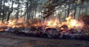 Tras 3 días, sofocan 1 de los 2 incendios forestales en La Malinche