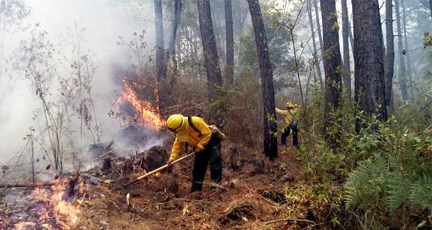 Brigadas liquidan 5 incendios forestales y atienden 7 en Puebla: PC