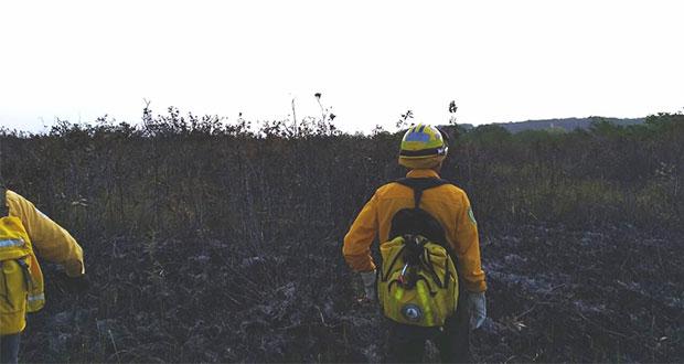 Fuego afecta 500 hectáreas de Los Petenes, Campeche; manglar a salvo