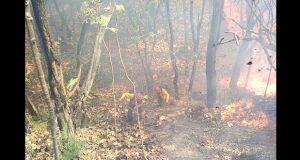 Afectan 72 incendios a bosques de Puebla y 15 estados; apagaron 22
