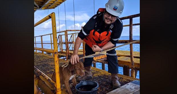 Perrito es rescatado en medio del mar, a 220 kilómetros de la costa