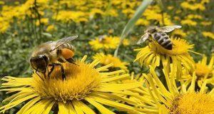 Investigador alerta de pérdida de mil 600 millones de abejas en México