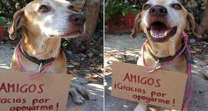 """""""Deko"""" el perrito que vende postres para pagar sus quimioterapias"""