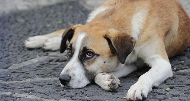 Castigarán hasta con 4 años de prisión maltrato animal en Jalisco