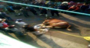 Toro escapa de rastro en Atlixco; provoca daños y heridos