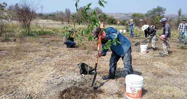 Arranca reforestación en Parque Bicentenario