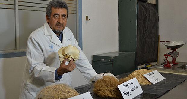 BUAP impulsa cultivo de hongo para personas de escasos recursos