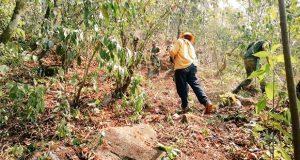 Cero incendios forestales activos en la entidad, reporta PC