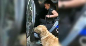 Detienen a perros por meterse a jugar a fuente en CDMX
