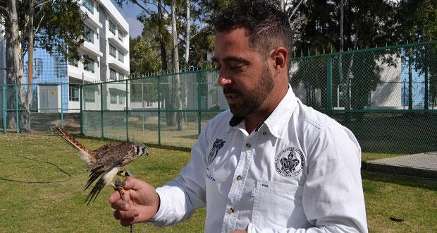 Investigadores de la BUAP crean prótesis para aves rapaces