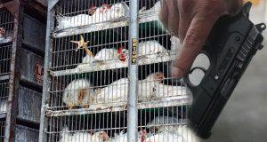 Avicultores de Tehuacán dejan de vender en 3 municipios
