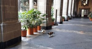 SHCP asegura que cuida a los gatos que habitan Palacio Nacional