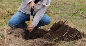 PND de AMLO incluye a Puebla en siembra de árboles y reconstrucción