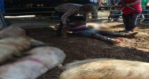Cuatro cerdos muertos y un ganadero herido deja riña en Tepeaca