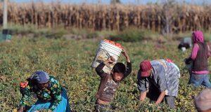 Puebla, segundo lugar en trabajo infantil durante 2018; concentra el 11.9%