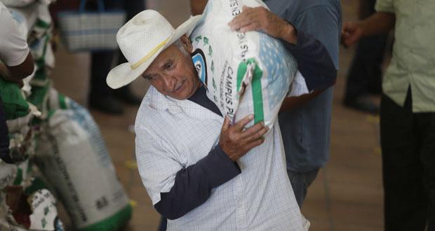 Ayuntamiento de San Andrés Cholula entrega maíz a 250 agricultores