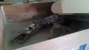 Encuentran restos prehispánicos en Totimehuacán y piden museo de sitio