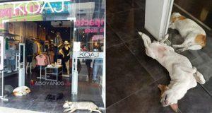 En Colombia, tienda de ropa protege a perros callejeros del calor