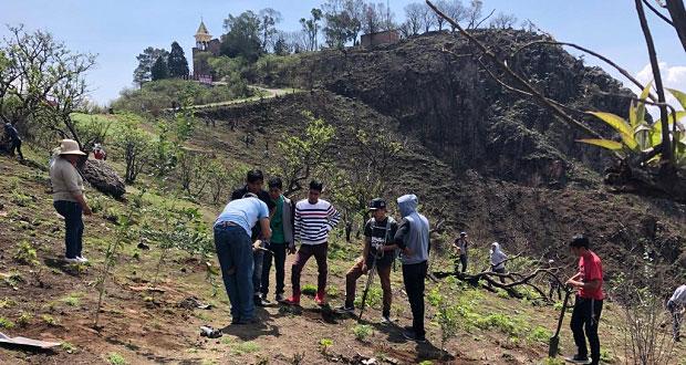 Realizan jornada de reforestación en localidad de Ocoyucan