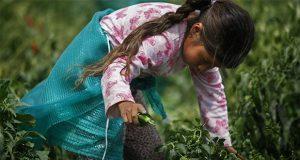 Con más de 200 mil menores trabajando, Puebla es segundo lugar: Inegi
