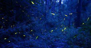 Invitan a temporada de luciérnagas en Tlahuapan
