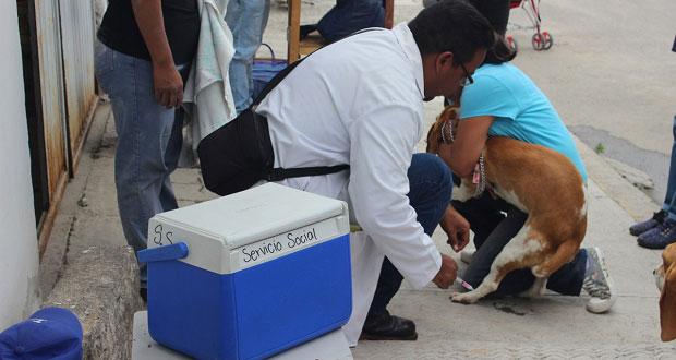 Comuna de Puebla aplica vacuna antirrábica gratuita a domicilio