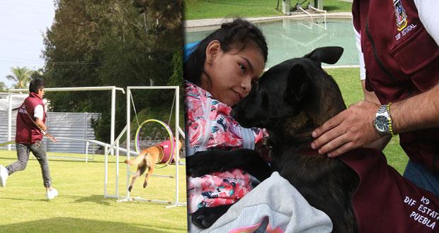 Arranca en Puebla Escuela Canina K9 y así funcionará