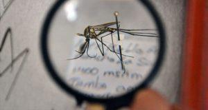 Investigadores de BUAP hallan especies de insectos no registradas