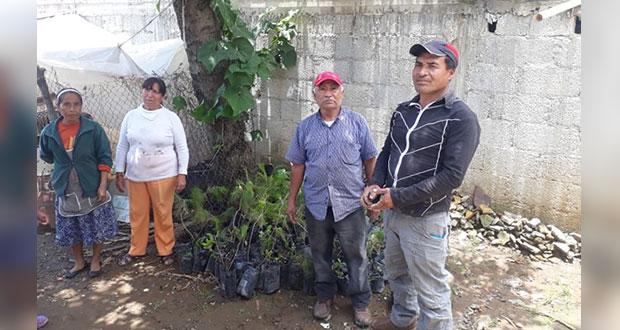 Reforestarán colonias del norte de la ciudad de Puebla
