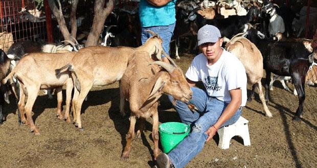 SGG entrega 240 cabras a pequeños agricultores de 4 municipios