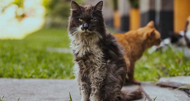 SHCP reporta muerte de gato en Twitter oficial y le llueven críticas