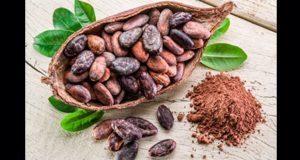 En México, falta incentivar cultura del uso del cacao local: experta