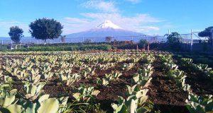 Puebla, segundo estado con más superficie para plantas ornamentales