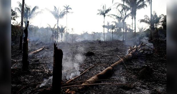 Amazonas sufre devastación por 16 días de incendios forestales