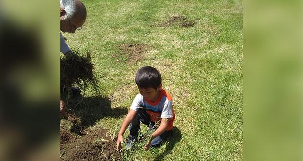 Rescatan áreas verdes en Amozoc y plantan 60 árboles